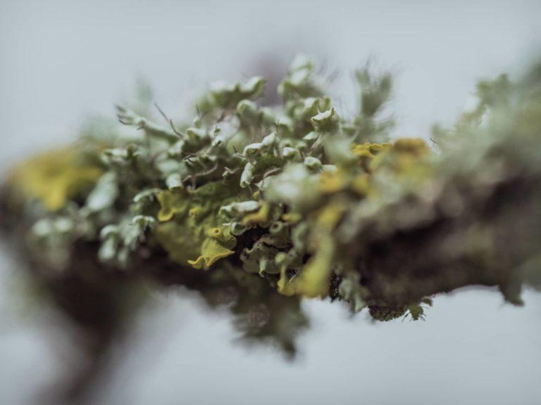 vigne-bourgogne